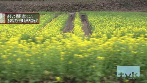 全国都市緑化横浜フェア 市内を彩る花々 関係者向けに公開